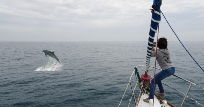 Segelboot mieten in Le Grau-du-Roi - Freedom 12 metres