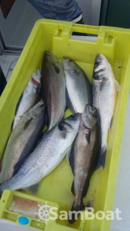 Ein Bénéteau Antares 620 Fishing mieten in Loctudy