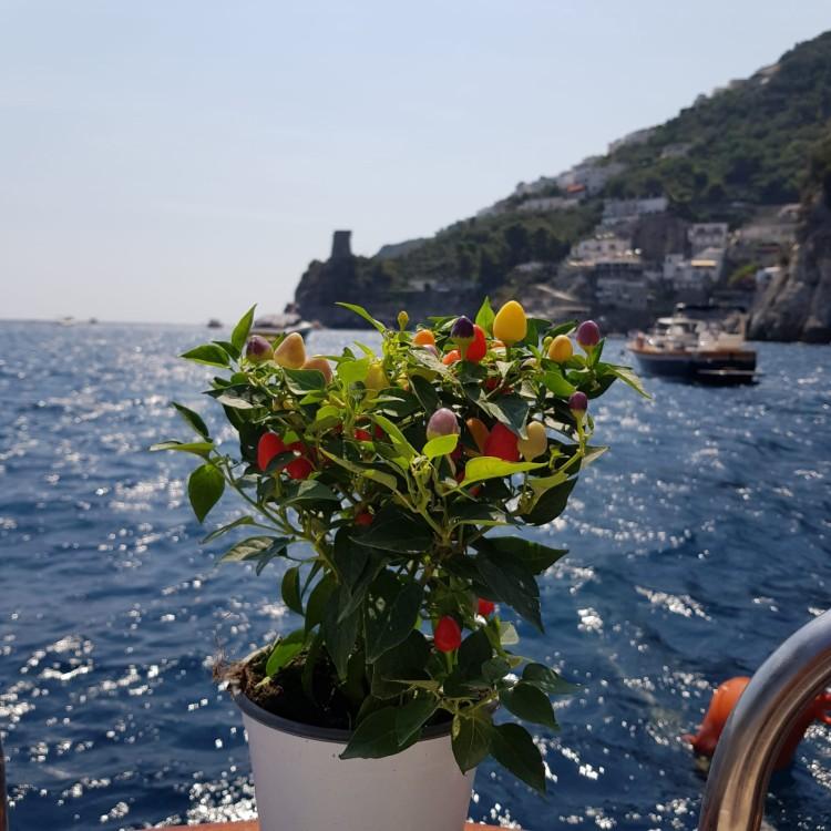 Motorboot mit oder ohne Skipper Aprea Mare mieten in Positano