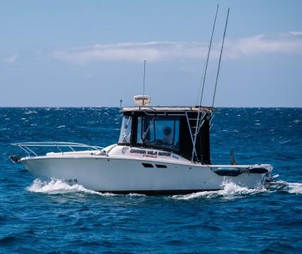 Bootsverleih Luhrs Tornament open 240 Las Galletas Samboat