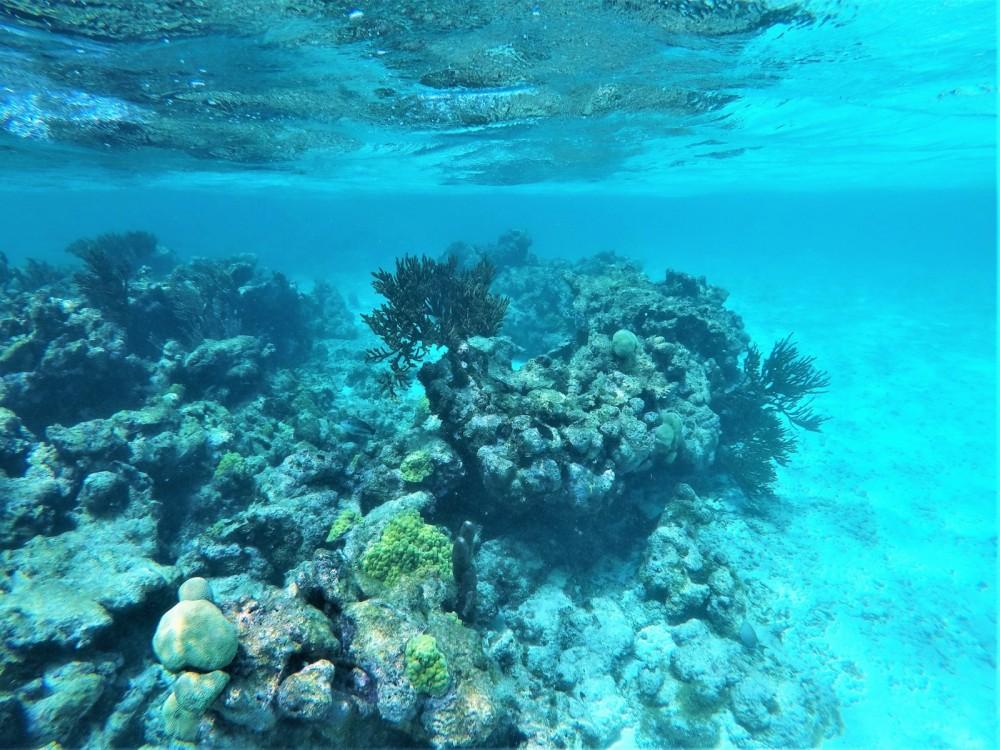 Bootsverleih Guadeloupe günstig Lagoon 400